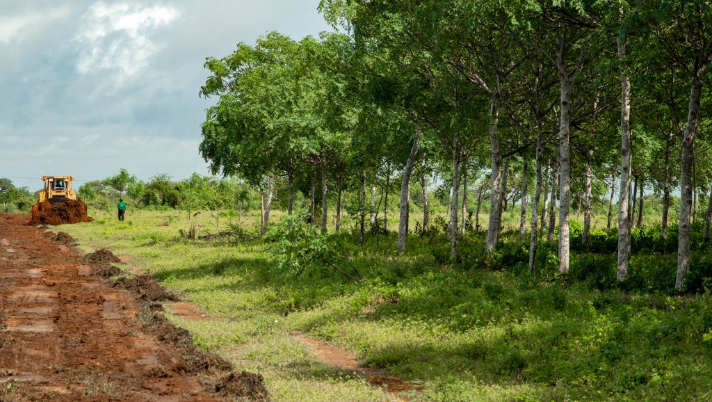 Gør som jeg og giv tilbage til naturen ved at investere i træer